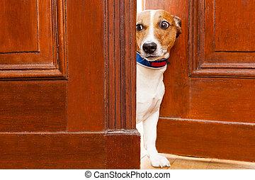 nosy dog at the door