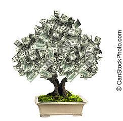 notas, árvore dinheiro, dólar