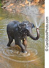nothern, asie, éléphant, baigneur, thaïlande, rivière