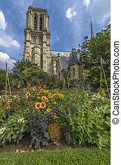 Notre-Dame de paris gardens in a summer sunny day