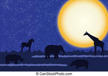 notte, animali, scheda, africano