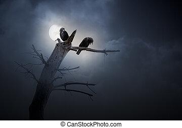 notte, di, corvi