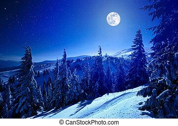 notte, foresta, profondo, inverno, pieno, sopra, coperto, neve, luna