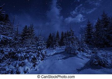 notte, paesaggio, in, inverno, foresta