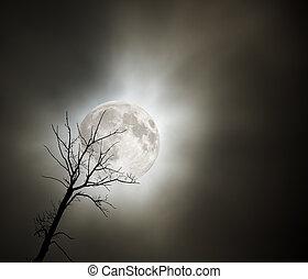 notte, pieno, albero, luna