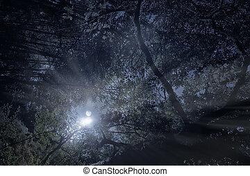notte, pieno, foresta, luna