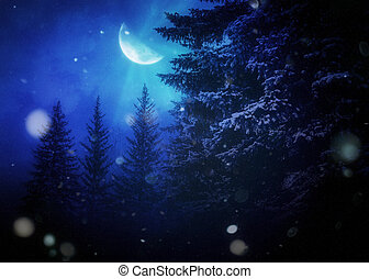 noturna, árvores, inverno, abeto