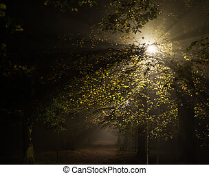 noturna, alto, parque, foco, nevoeiro, iso, macio