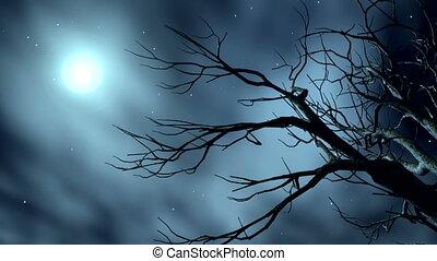 noturna, estrelas, 9-1