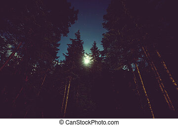 noturna, floresta