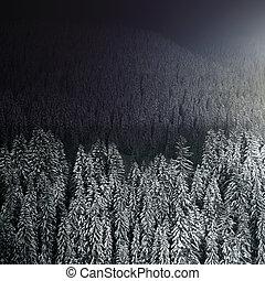 noturna, floresta, inverno, bonito