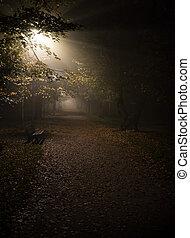noturna, iso, alto, parque, foco, nevoeiro, macio