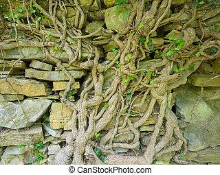 noueux, coffre, pierre, grand, vieux, mur, lierre