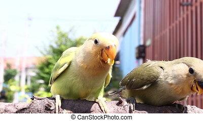 nourrir oiseaux, branche