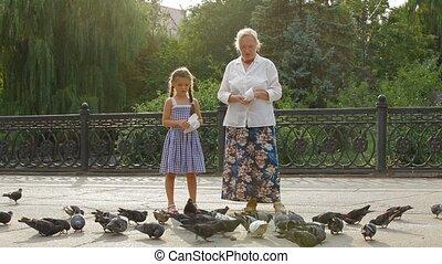 nourrir oiseaux, dans, a, parc