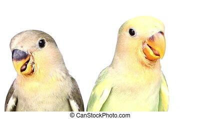 nourrir oiseaux, isolé