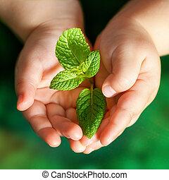nourrisson, vert, plante, tenue, mains
