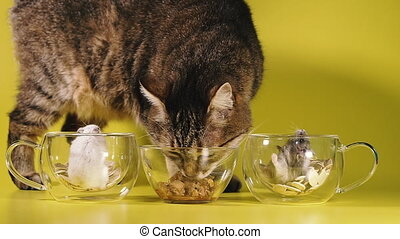 nourriture, cat., mange, ignorer, chat, hamsters., ...