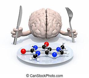 nourriture, cerveau, moléculaire, concepts
