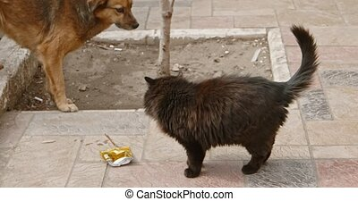 nourriture, chat, chien, errant, baston