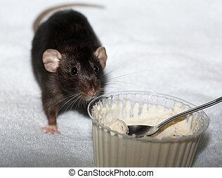 nourriture, noir, cuillère, manger, rat