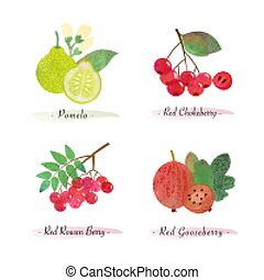 nourriture organique, fruit baie, chokeberry, pomelo, rowan...
