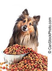 nourriture, regarder, bol, chien, confondu