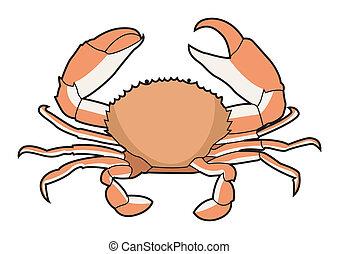nourriture, vecteur, mer, illustration, crabe