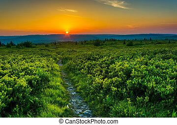 nous, désert, sods, national, monongahela, forêt, coucher soleil, chariot