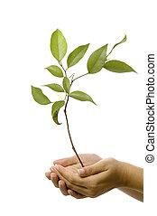 nouveau, arbre, tenant main