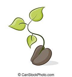nouveau, plante, croissance