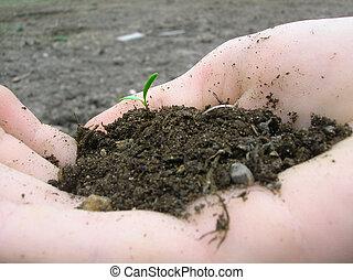 nouveau, planter vie