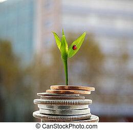 nouvelle croissance, argent, concept