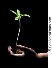 nouvelle vie, plante