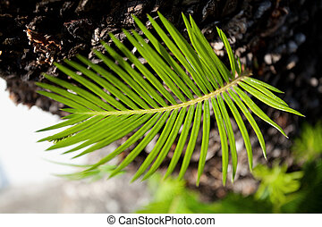 nouvelle vie, plante verte