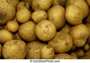 nouvelles pommes terre