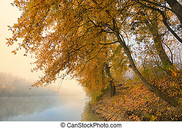 Foggy and Sunny Day on Siret river in Romania