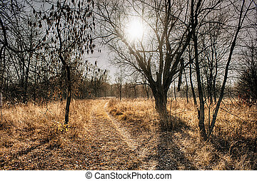 November landscape. Pale colors of the season