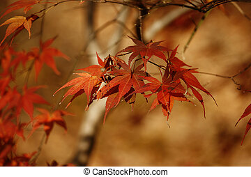November leaf - November maple red leaf with a copy space