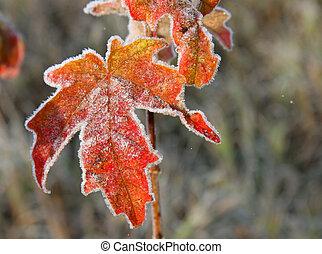 November leaves in rural Ontario