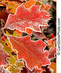 November leaves with a touch of frost in Ontario
