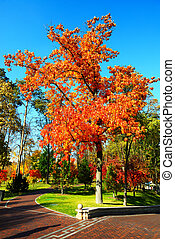 NOVI PETRIVTSI, UKRAINE - OCTOBER 14: The trees in autumn colors