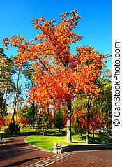novi, petrivtsi, ukrajna, -, október, 14:, a, bitófák, alatt, ősz, befest