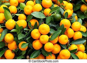 novo, kumquat, chinês, ano
