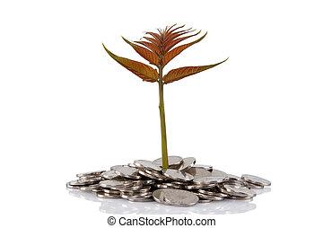 novo, planta, crescendo, de, a, moedas