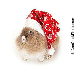 nowy, hat., lionhead, królik, rok