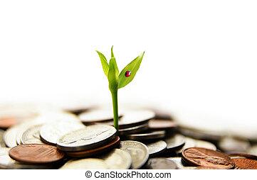 nowy, zielona roślina, wystrzelić, rozwój, z, pieniądze