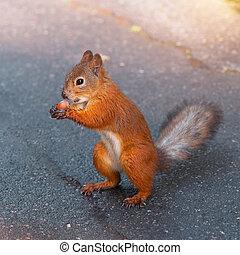 noz, esquilo
