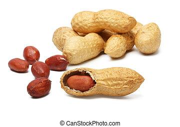 nozes, amendoins, em, a, concha, ligado, um, fundo branco
