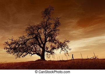 nu, árvore carvalho, em, pôr do sol
